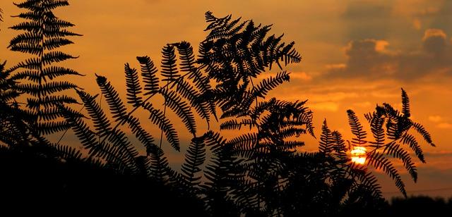 sunrise-1014550_640